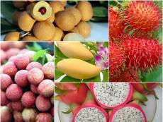 Tìm đầu ra cho trái cây: Cửa mở nhưng vẫn khó vào